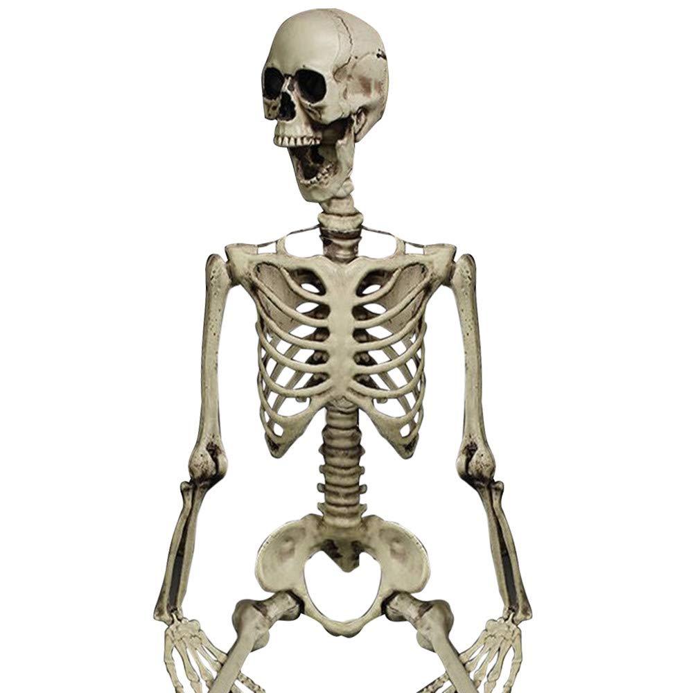 Halloween Party Decoration Poseable Full Size Human Skull Skeleton