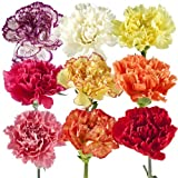 Wholesale Carnations (300 Assorted)