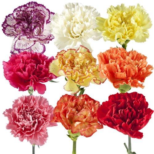 Fresh Bulk Flowers Amazoncom