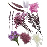 Purple Real Dried Leaf Flowers Assorted Colorful Daisies Plant Herbarium for Art Craft Jewelry Making