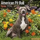 American Pit Bull Terrier Calendar AVONSIDE