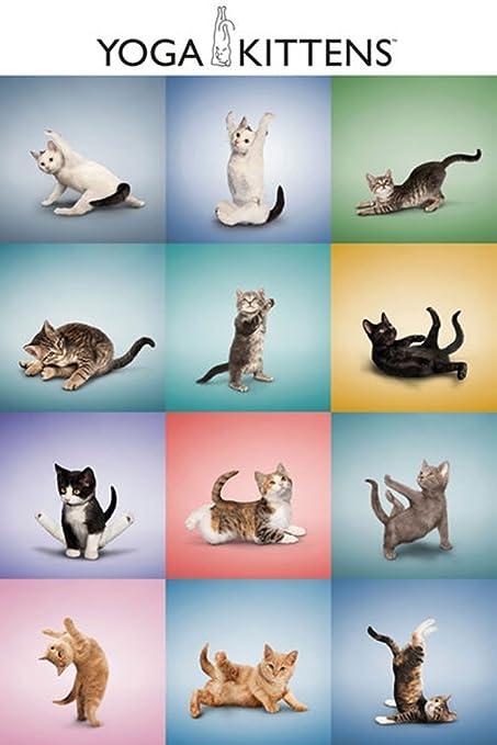 Empire Merchandising 668561 Cats, Yoga Kittens Grid, Gatos ...