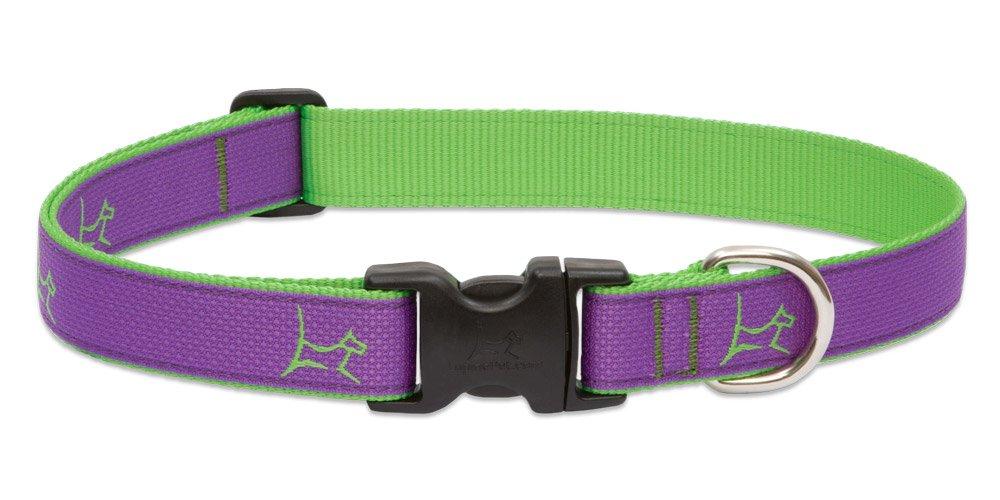 1\ Lupine 90352 1-Inch Hampton Purple Adjustable Dog Collar for Medium to Large Dogs