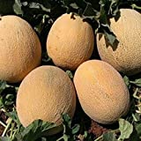 buy NIKITOVKASeeds - Melon Ananas - 40 Seeds - Organically Grown - NON GMO now, new 2020-2019 bestseller, review and Photo, best price $5.49