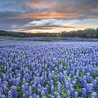 Wildflower Home Fragrance Room Spray - The Natural Scent of Texas Bluebonnet Wildflowers