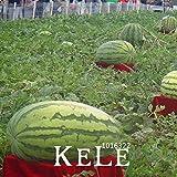 30 Semillas / Semillas Semillas Frutas Bolsa gigante sandía La plantación de semillas de sandía sin OMG frutos comestibles, # BI3OID