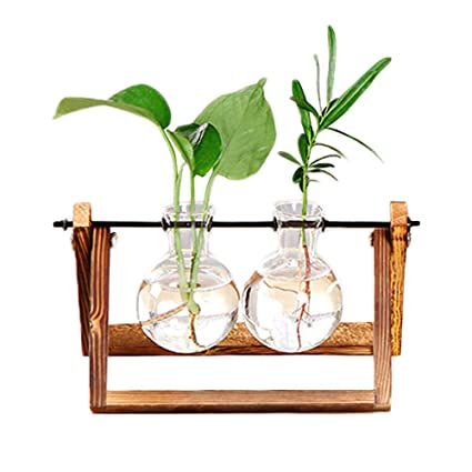 Amazon Com Aozbz Glass Terrarium Clear Hydroponic Terrarium Planter