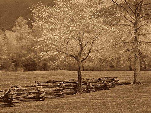 Smokies Fence by Wendy Caro - 14