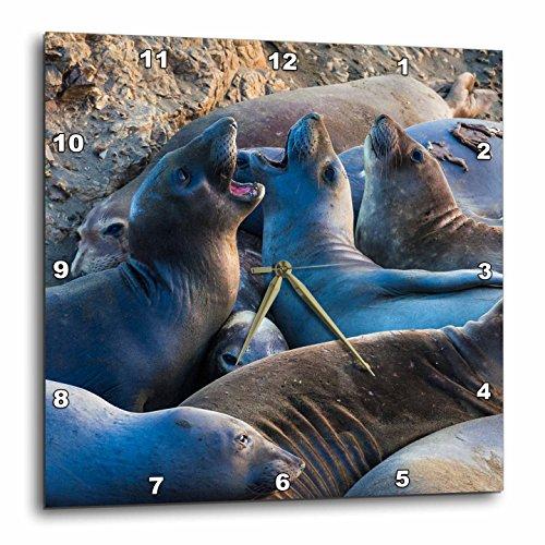 3dRose Danita Delimont - Seals - Northern elephant seals, San Simeon, California - 13x13 Wall Clock (dpp_278639_2) (Light Simeon Two San)