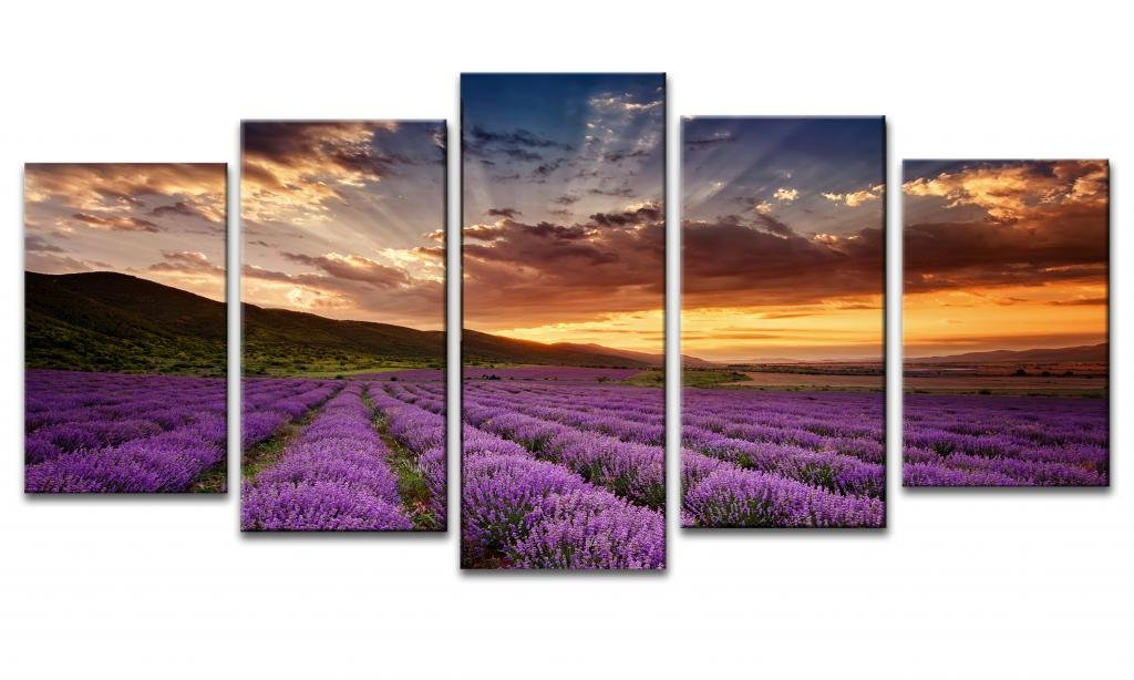 Lavender Fields Office Canvas Wall Art