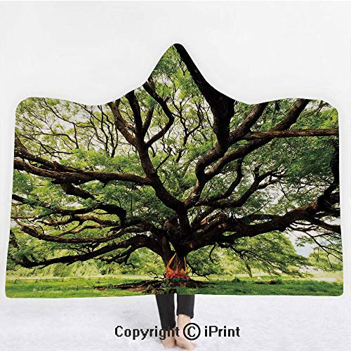 Nature 3D Print Soft Hooded Blanket Adult Premium Throw Blanket,Lightweight Microfiber,The Largest Monkey Pod Tree in Thailand Eastern Green Big Branches Growth Eco Photo,All Season for Adult(60