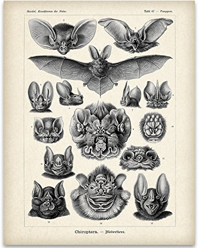 Ernst Haeckel Bats Art Print - 11x14 Unframed Art Print - Great Biology Lab Decor or Gift for People Who are Fascinated with Bats