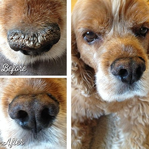 What does it mean when a dogs nose is dry and crusty