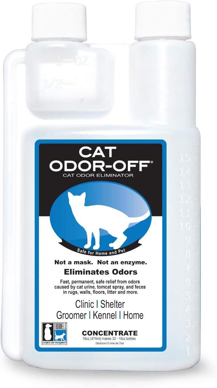 how to get rid of cat pee ammonia smell