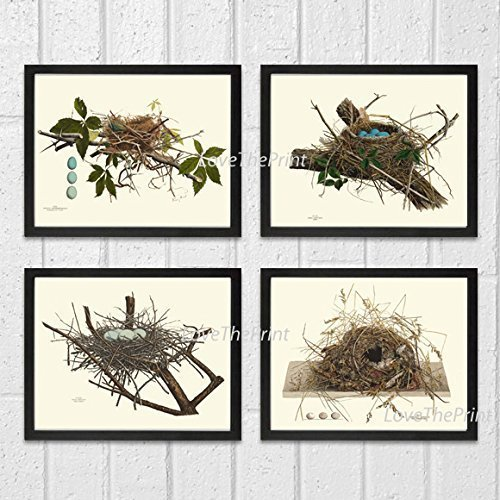 Bird Nest Egg Botanical Set of 4 Prints Unframed Antique Beautiful Tree Green Forest Birdwatcher Nature Home Room Decor Wall Art (Pottery Barn Bird Plates)