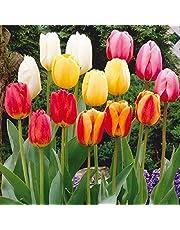 TULIPANI A COLORI ASSORTITI IN MISCUGLIO a fioritura primaverile - ALTA QUALITA' OLANDESE (20, Classici)