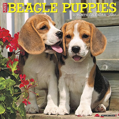 Just Beagle Puppies 2019 Wall Calendar (Dog Breed Calendar) Calendar – Wall Calendar, July 15, 2018 Willow Creek Press 1549200321 Calendars NON-CLASSIFIABLE