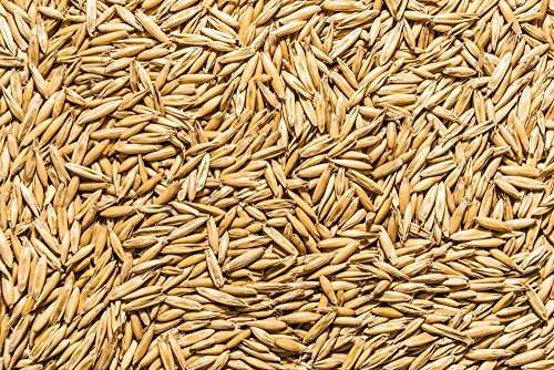Thunder Acres Non GMO, Certified Organic, Oat Seed (2 lb.)