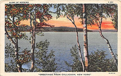 Greetings from Glory of Morning Callicoon New York Postcard