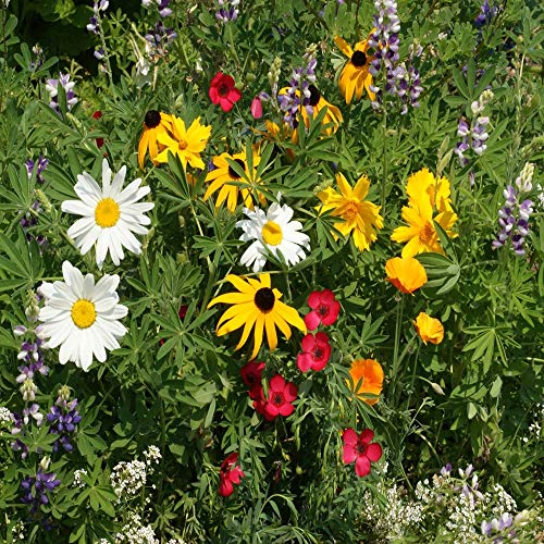 Outsidepride Northwest Wildflower Seed Mix - 5 LB (Best Time For Wildflowers In Wa)