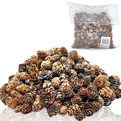 BANBERRY DESIGNS Natural Brown Pinecones - Approx. 375 Pieces (1/2 lb Bag) of Assorted Sized Pine Cones - Fall and Christmas Bowl Filler Crafts - Unscented