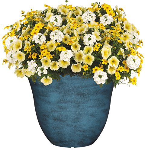 "Classic Home and Garden Honeysuckle Planter, Patio Pot, 13"" Blue Jean"
