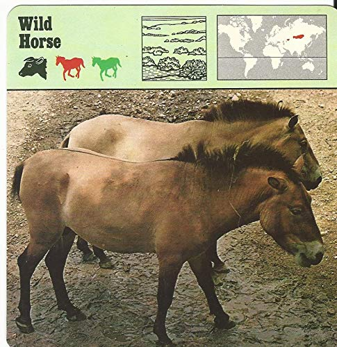 1975 Editions Rencontre, Animals Card, 19.437 Wild Horse
