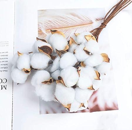 pah-macy Ramo de Flores Secas Naturales Ramas Algodon Artificial Flor de Algodon Seca Blanco Flores Hogar Bodas Fiestas Cocina Escritorio Restaurante-Algodón [Azul Claro] 10: Amazon.es: Hogar
