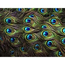 CAKEUSA PEACOCK FEATHERS Print Great for Weddings Birthday 1/2 Size Frosting Sheet Cake Topper Edible Image