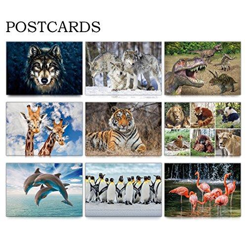 CEIEC3D Lenticular 3D Postcards Set of 9 Variety Animals Theme Greeting Cards for Preschool, Kindergarten, or Elementary School Teachers (Wild ()