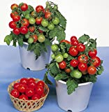 30+ ORGANICALLY GROWN Dwarf Red Robin Tomato Seeds, Heirloom NON-GMO, Sweet, Low Acid, Determinate, Open-Pollinated, Delicious, From USA Review