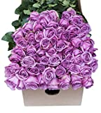 Farm2Door Farm-Fresh Roses, 25/50/100 Fresh Purple Roses