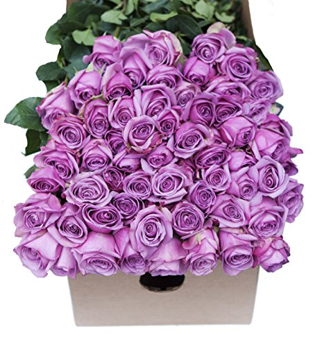 Farm2Door Wholesale Roses: 25 Fresh Purple Roses (Long Stemmed - 50cm) from Colombia - Farm Direct Wholesale Fresh Flowers