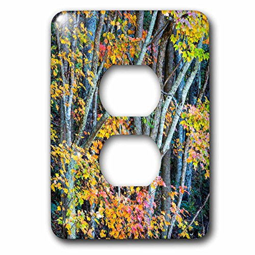 Blue Ridge 2 Light - Danita Delimont - Autumn - North Carolina, Trees in Blue Ridge Parkway - Light Switch Covers - 2 plug outlet cover (lsp_231402_6)