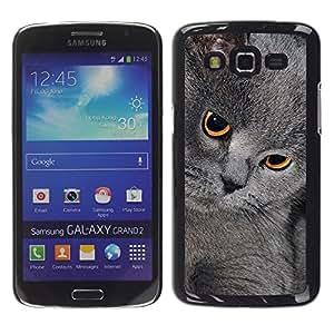 COVERO Samsung Galaxy Grand 2 SM-G7102 SM-G7105 / British shorthair korat chartreux cat / Prima Delgada SLIM Casa Carcasa Funda Case Bandera Cover Armor Shell PC / Aliminium