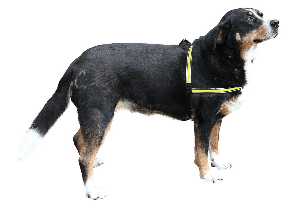 - leuchtendes Geschirr f/ür Hunde in verschiedenen Gr/ö/ßen 120cm Kerbl Hundegeschirr LIGHT REFLEX