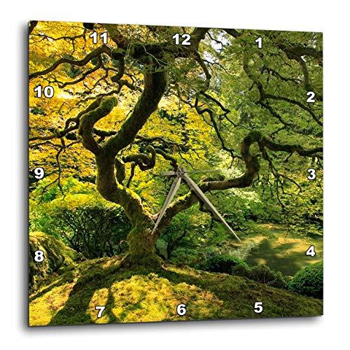 3dRose Danita Delimont - Trees - USA, Oregon, Portland. Japanese lace Maple Tree in Japanese Garden. - 10x10 Wall Clock (DPP_314973_1) (Portland Furniture Patio Oregon)