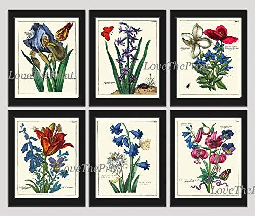 (Antique Botanical Print Set of 6 Beautiful Rare Blue Iris Lily Butterfly Beetle Green Graden Nature Illustration Home Room Decor Wall Art Unframed)