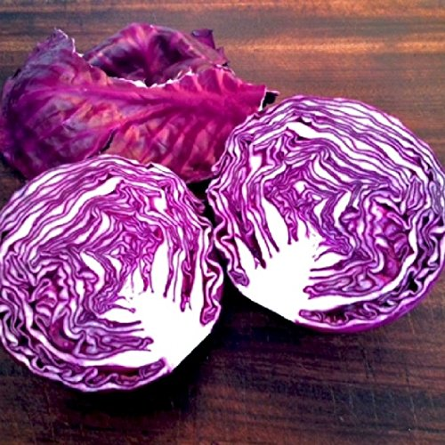 red cabbage seeds - 3