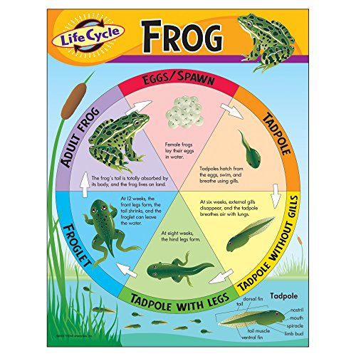 Trend Enterprises Inc. Life Cycle of a Frog Learning Chart, 17