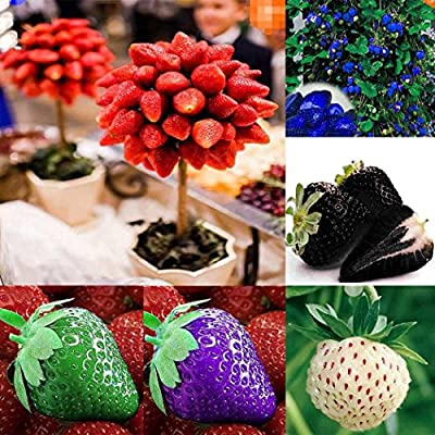 TelDen Garden - 100pcs New Nice Adorable Flower Fragrant Blooms Bonsai Strawberry Seed Flowers : Garden & Outdoor