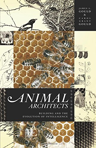 Animal Architects: Building and the Evolution of Intelligence