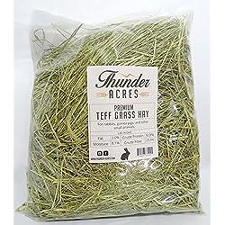 Premium Teff Grass Hay (1 lbs.)