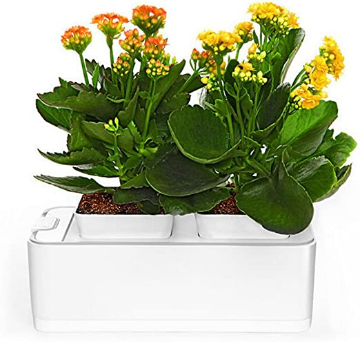 Hydroponic Smart Mini jardín macetas Fashion Mini jardín Smart jardín hidropónico: Amazon.es: Jardín