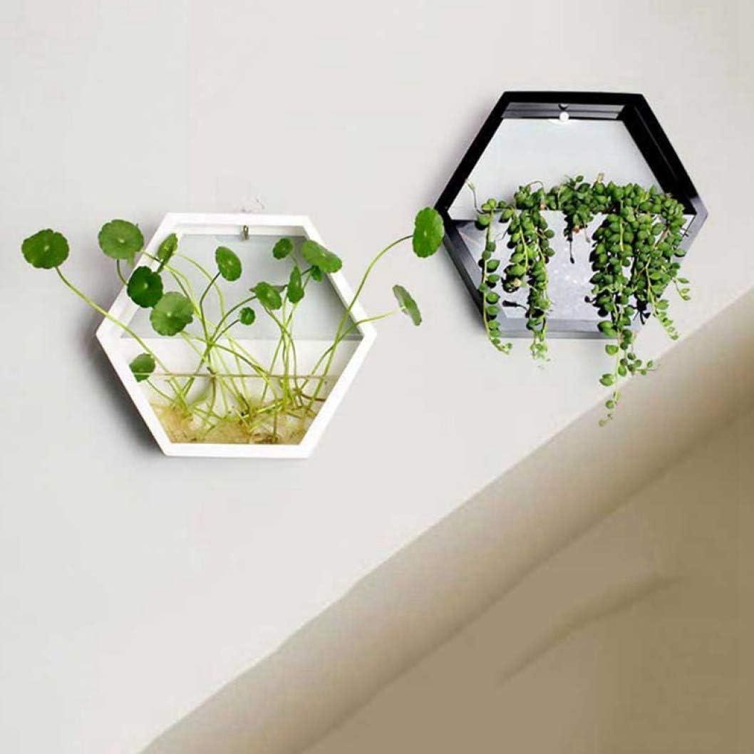 Morden Hexagon Indoor Wall Succulent Hanging Planter,Decorative Freestanding Mount Holder with Glass