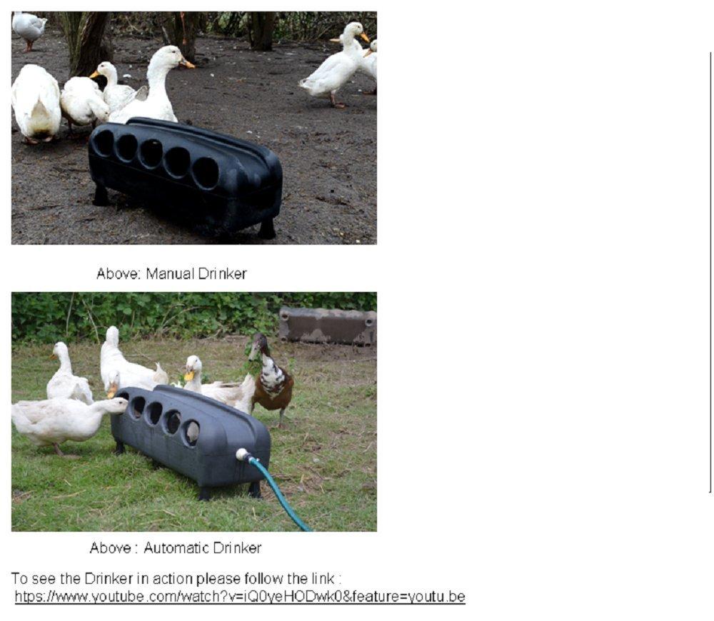 Automatic Plastic 16 Litre Duck Drinker BEC