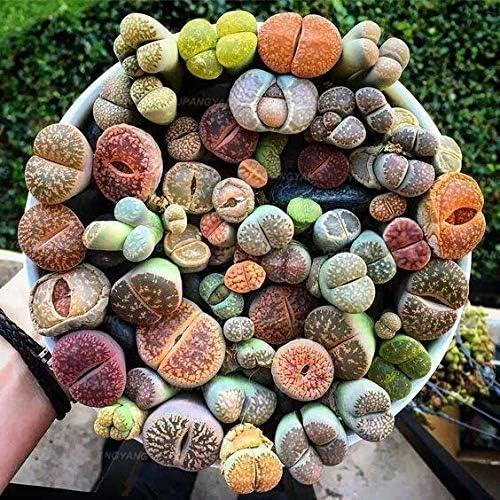 Plantas artificiales de cactushttps://amzn.to/2Y5mRhv