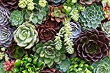Garden Winds - Gazebo Back Drop Screen Kit - Succulents - 114''