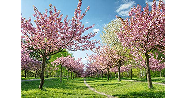 OFILA Spring Flower Blossom Backdrop 12x8ft Forest Photos Background Park Scenery Spring Outing Events Photos Birthday Party Decoration Baby Shower Shoots Wedding Photo Props