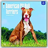 American Pit Bull Terriers 2017 Square